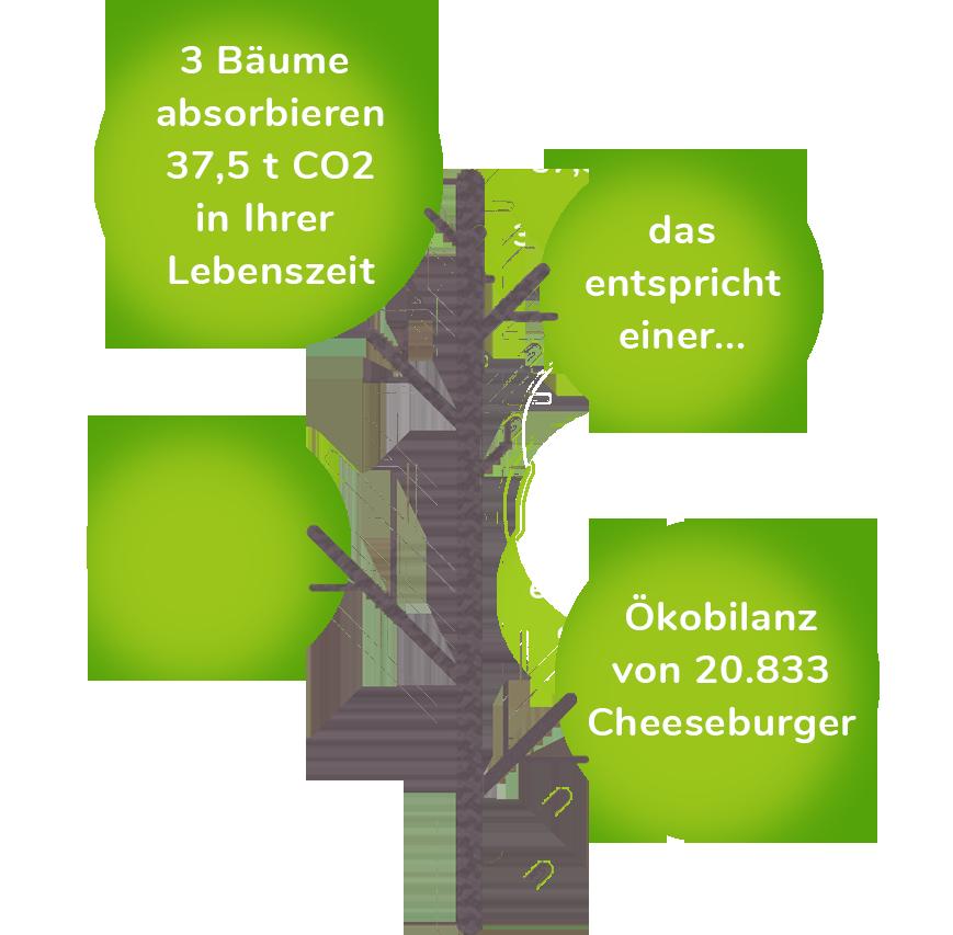 CO2 Bilanz Baum