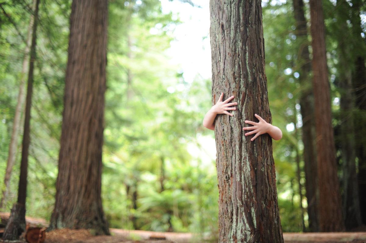 Kind setzt Zeichen für Nachhaltigkeit und umarmt Baum im Wald