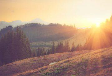 Sonnenaufgang über Wald